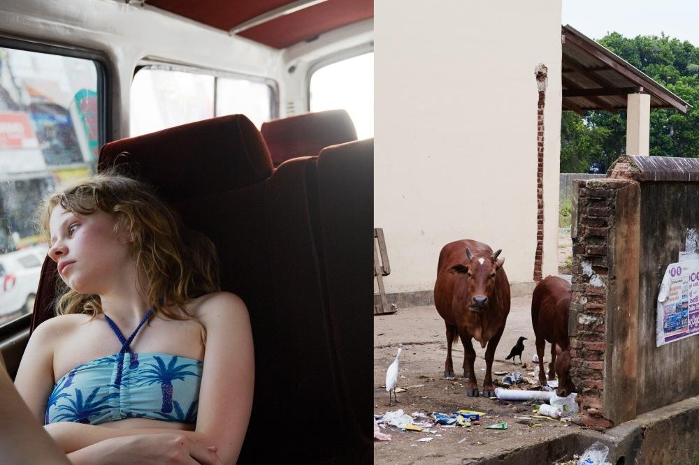 wagtailgirlsannakern_cow